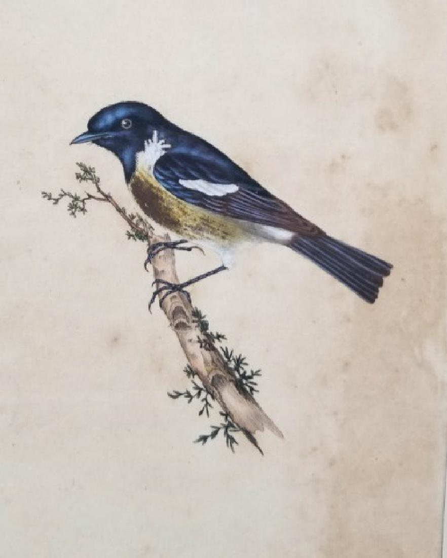 Four Antique 19th C Hand Colored Bird Engravings - 3