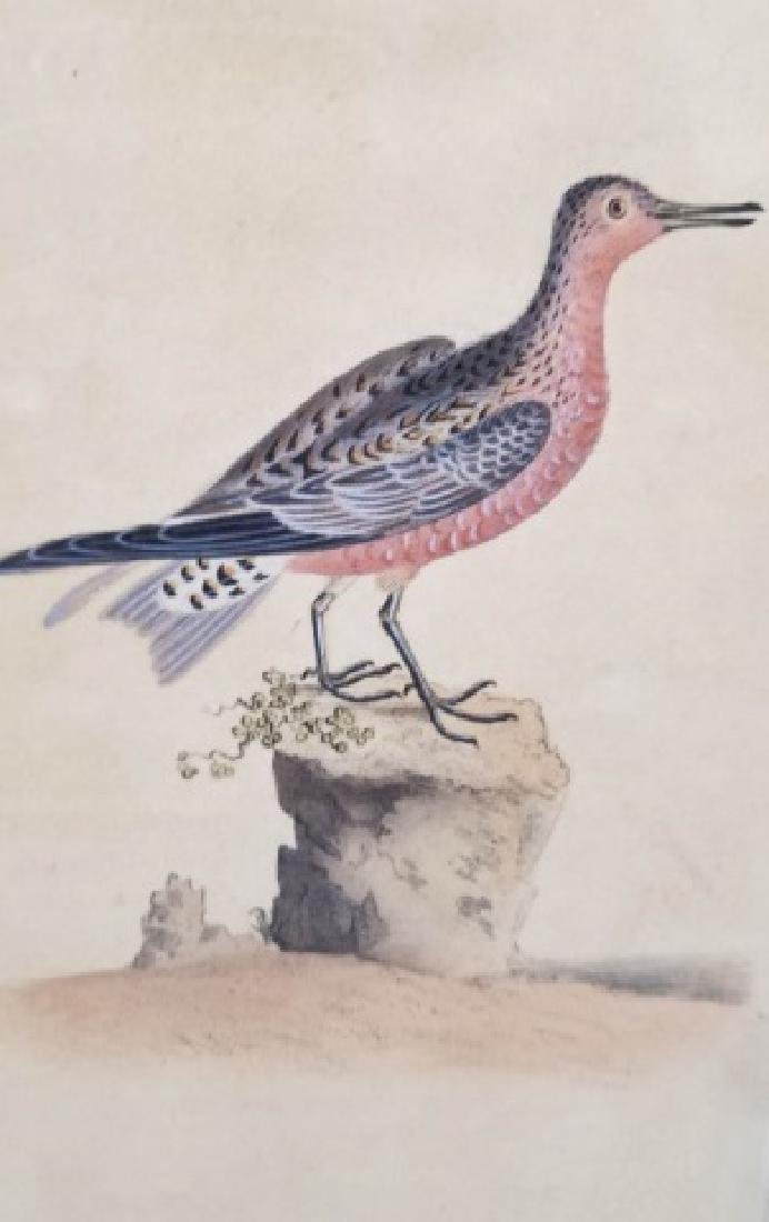 Four Antique 19th C Hand Colored Bird Engravings - 5