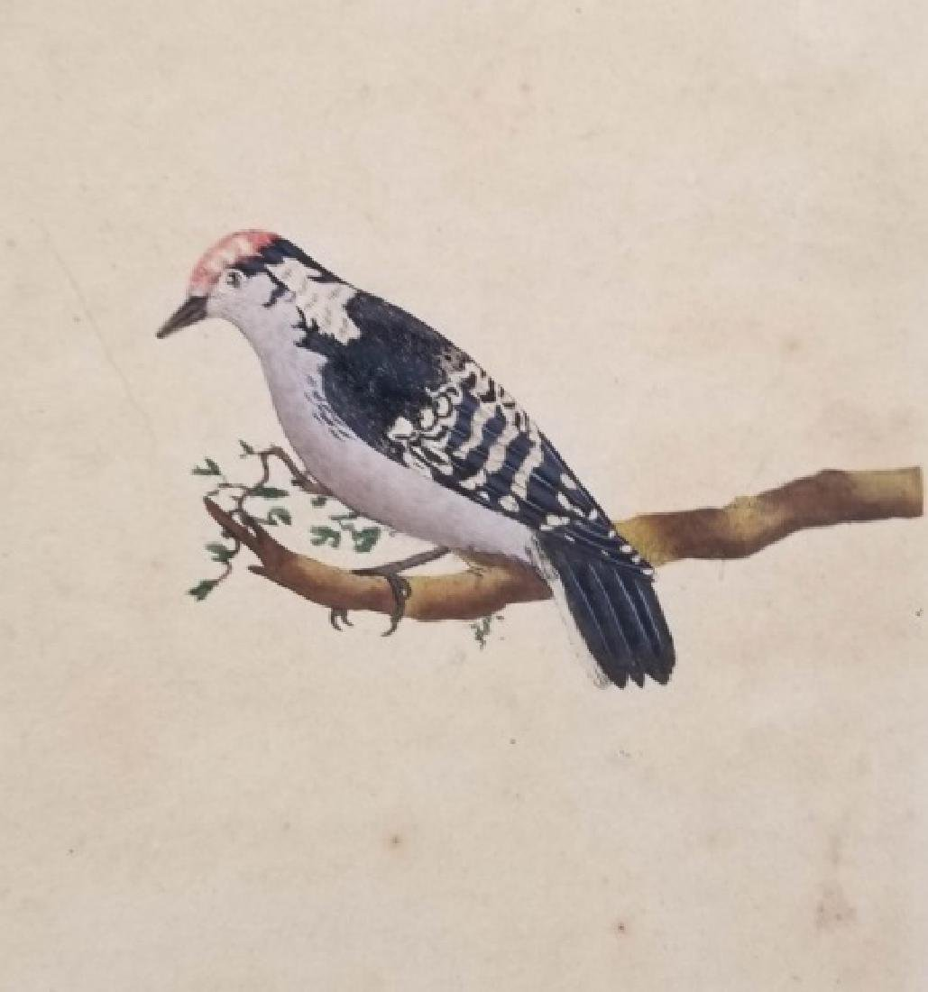 Four Antique 19th C Hand Colored Bird Engravings - 7