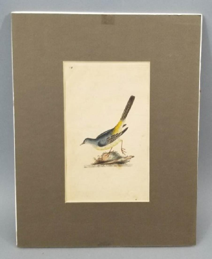 Four Antique 19th C Hand Colored Bird Engravings - 8