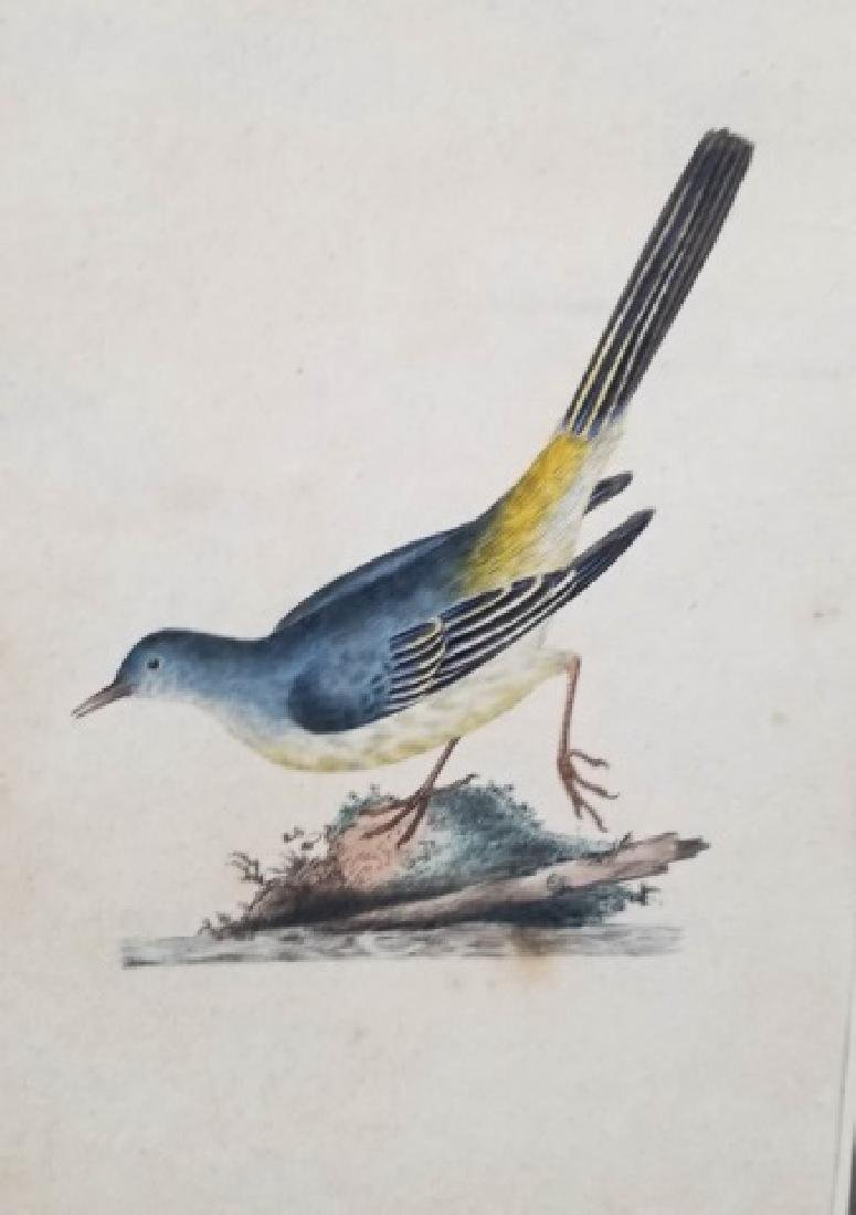 Four Antique 19th C Hand Colored Bird Engravings - 9