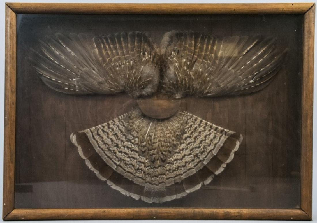 Grouse Wing & Tail Feather Taxidermy Shadowbox