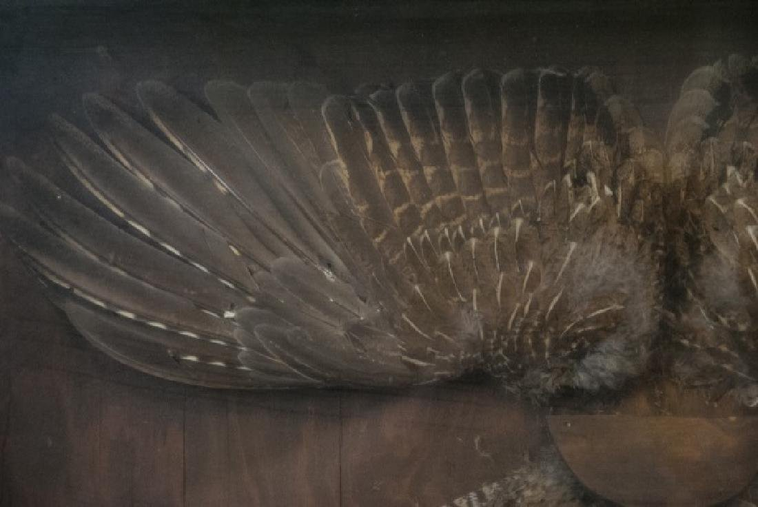 Grouse Wing & Tail Feather Taxidermy Shadowbox - 3