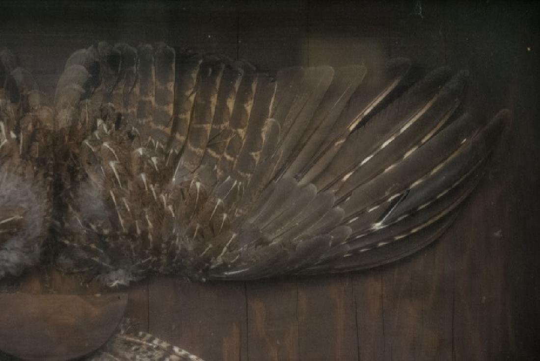 Grouse Wing & Tail Feather Taxidermy Shadowbox - 4