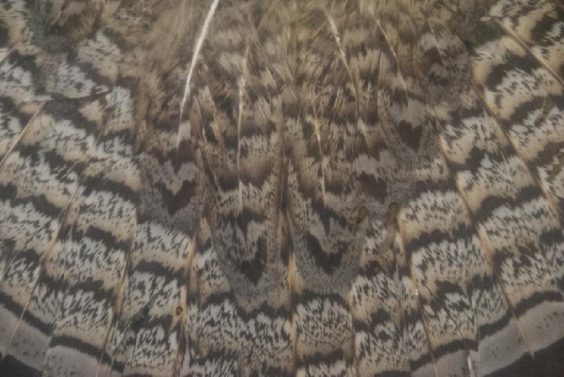 Grouse Wing & Tail Feather Taxidermy Shadowbox - 5