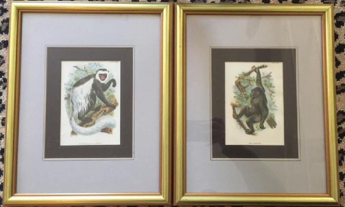 Pair of Framed Gorilla & Monkey Nature Prints