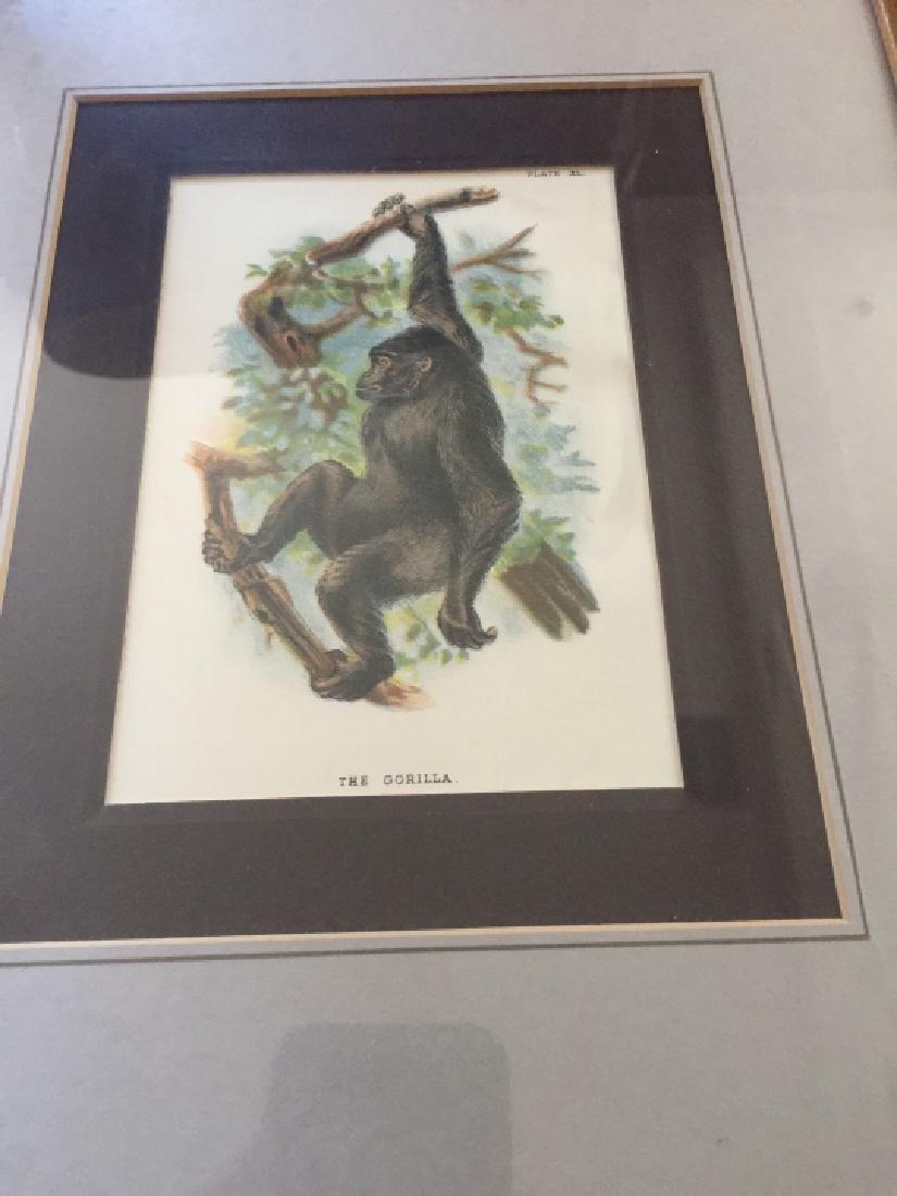 Pair of Framed Gorilla & Monkey Nature Prints - 2