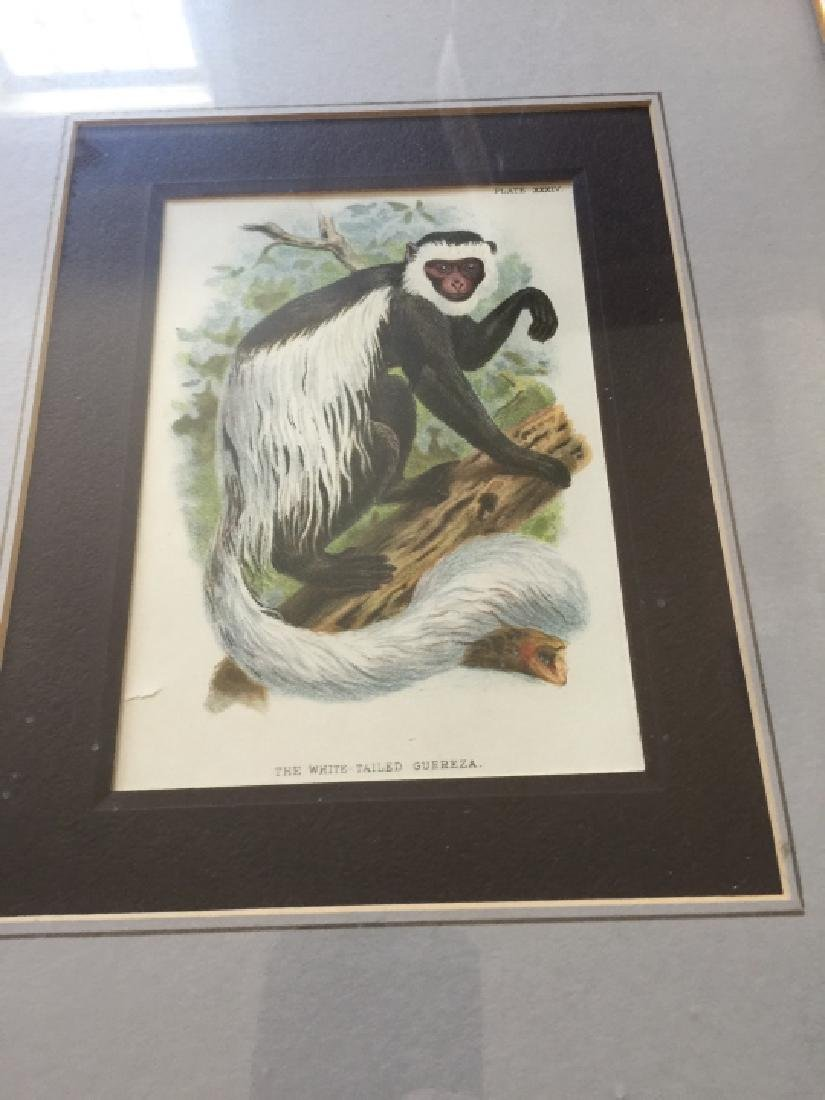 Pair of Framed Gorilla & Monkey Nature Prints - 3