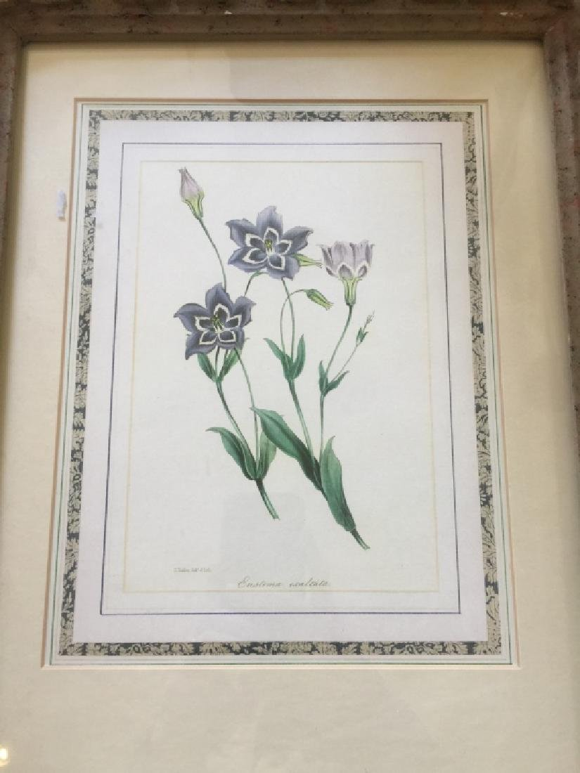 Floral Botanical Print in French Style Frame - 3