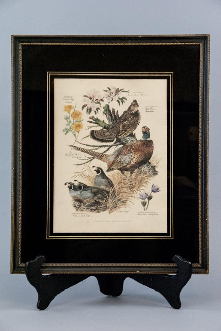 Vintage Framed Lithography Print Of Game Birds