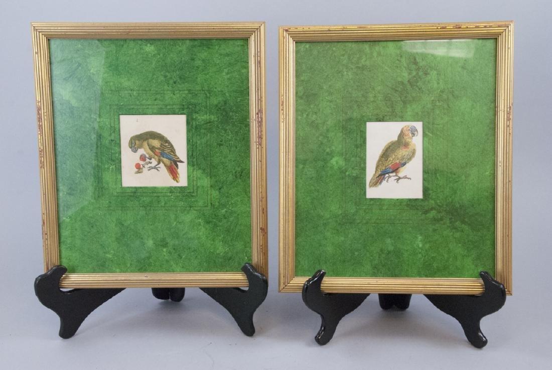 Pair Antique 19th C Hand Colored Prints of Parrots