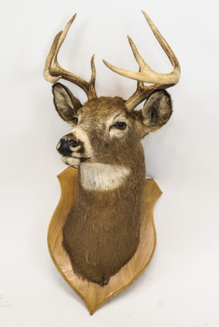 Vintage Hunting Trophy - Taxidermy Deer Buck Head