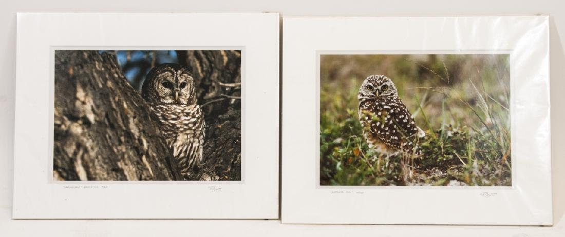 Pair Signed & Numbered Owl Photos by Randy Napier