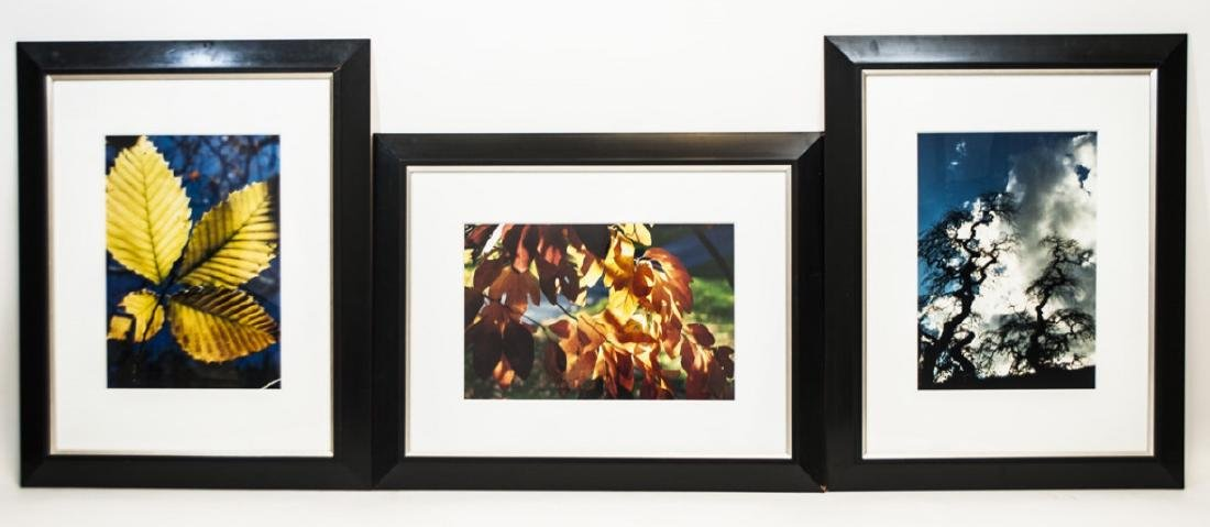 Trio of Framed Leaf & Tree Color Photographs