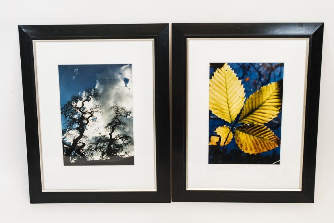 Trio of Framed Leaf & Tree Color Photographs - 2