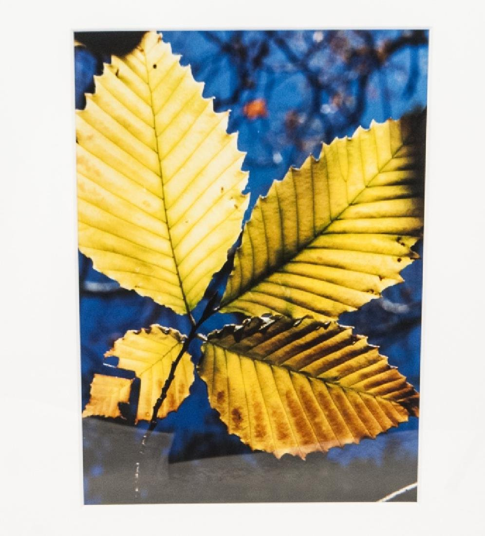 Trio of Framed Leaf & Tree Color Photographs - 5