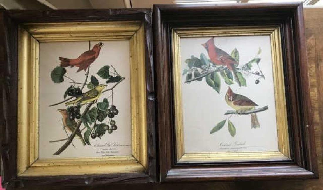 Pair 19th C Victorian Ornithological Framed Prints