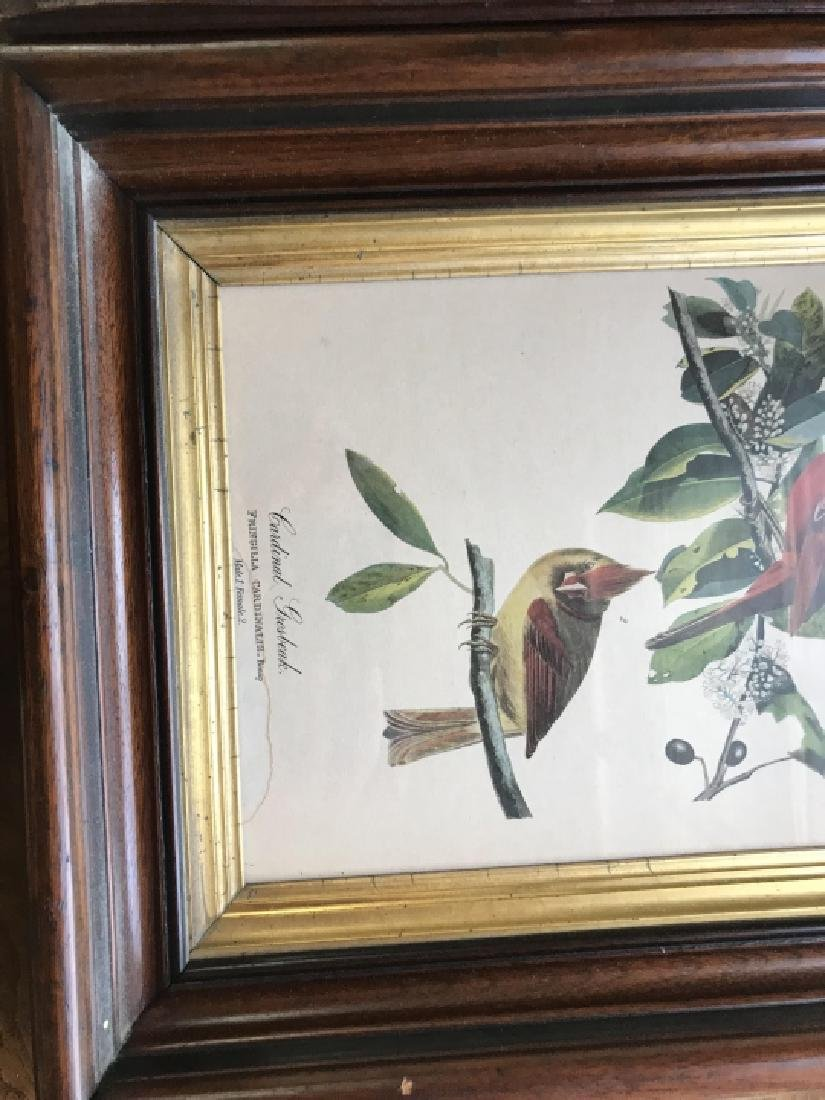 Pair 19th C Victorian Ornithological Framed Prints - 2