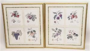 Pair Framed Prints of Botanical Engravings