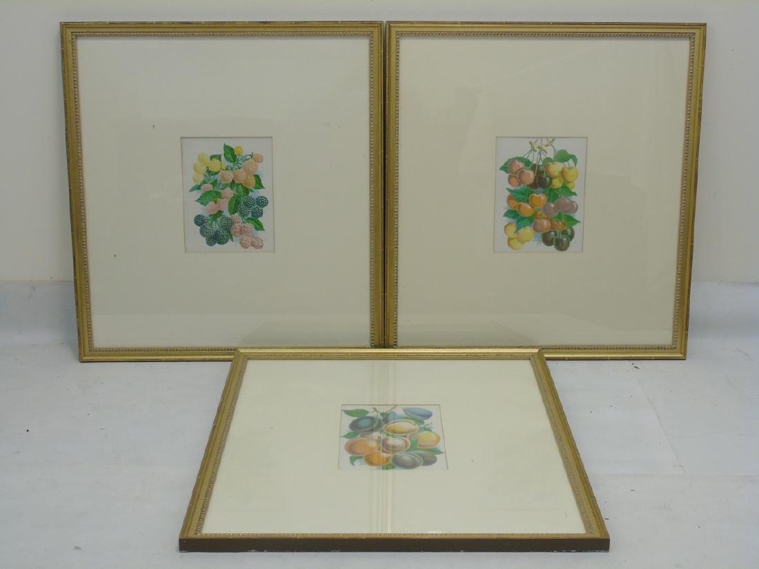 Group of Three Framed Botanical Fruit Prints
