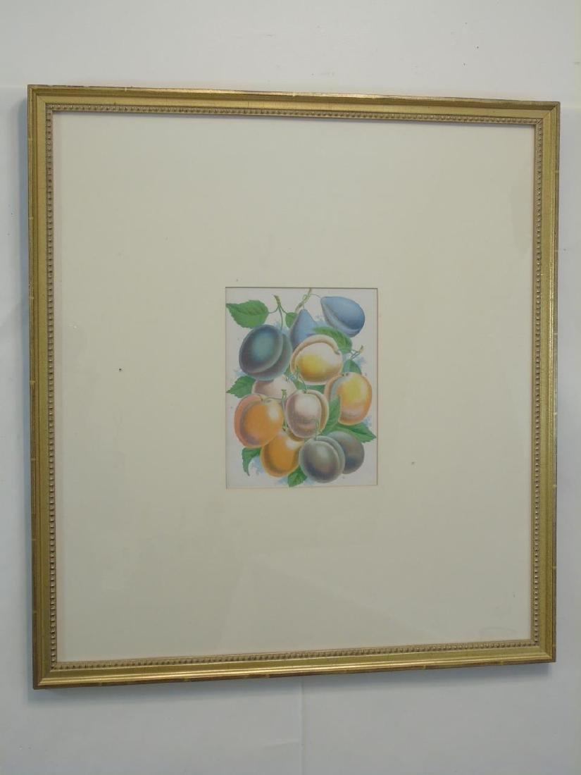 Group of Three Framed Botanical Fruit Prints - 3