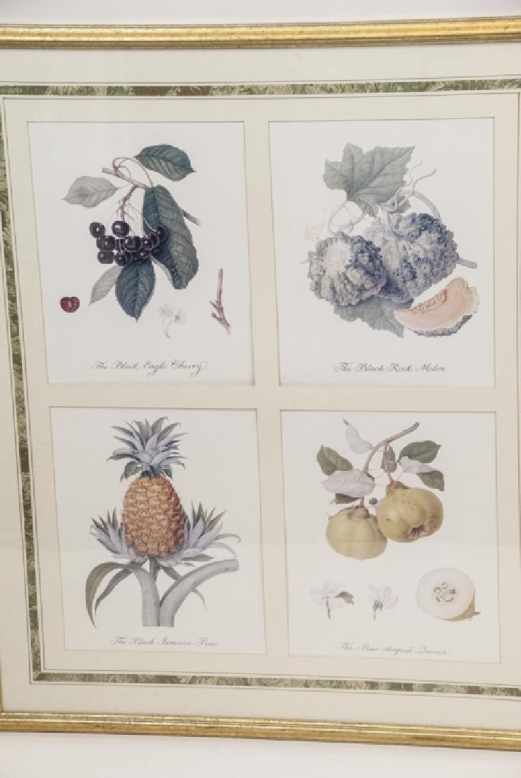 Pair Framed & Matted Botanical Prints - 2