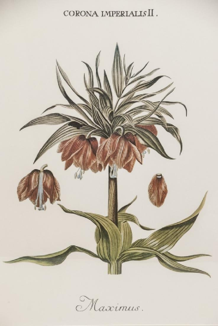 Pair Framed & Matted Botanical Prints - 3