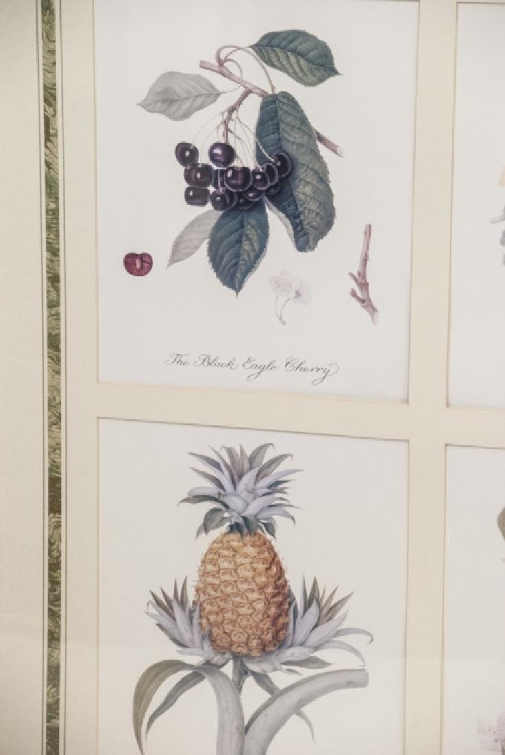 Pair Framed & Matted Botanical Prints - 4