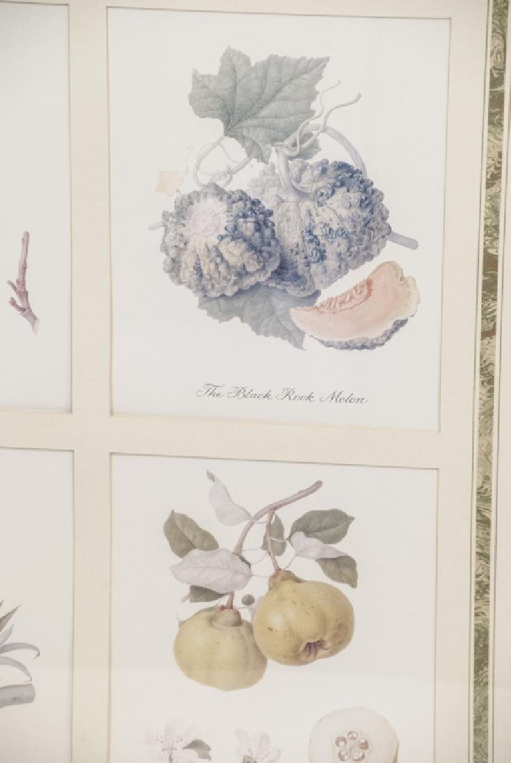 Pair Framed & Matted Botanical Prints - 5