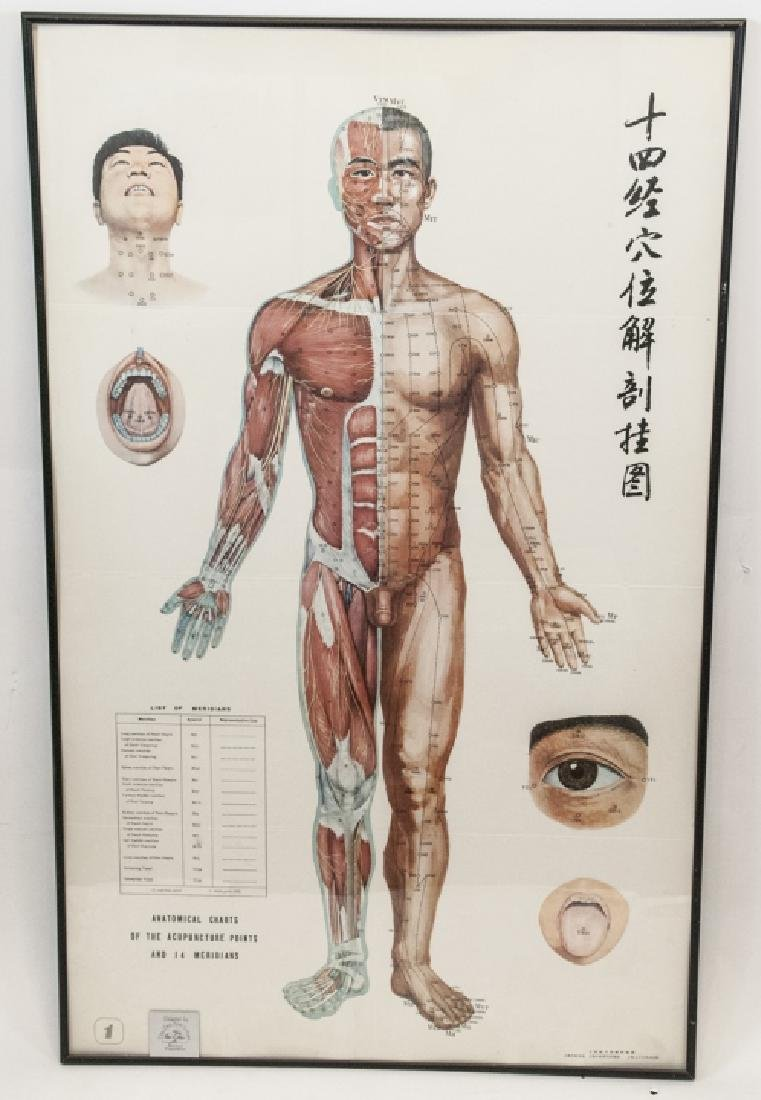 Vtg Chinese Acupuncture / Anatomical Chart Framed