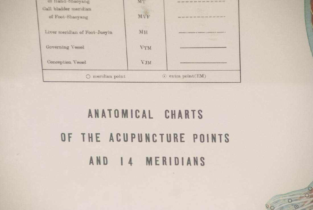 Vtg Chinese Acupuncture / Anatomical Chart Framed - 2