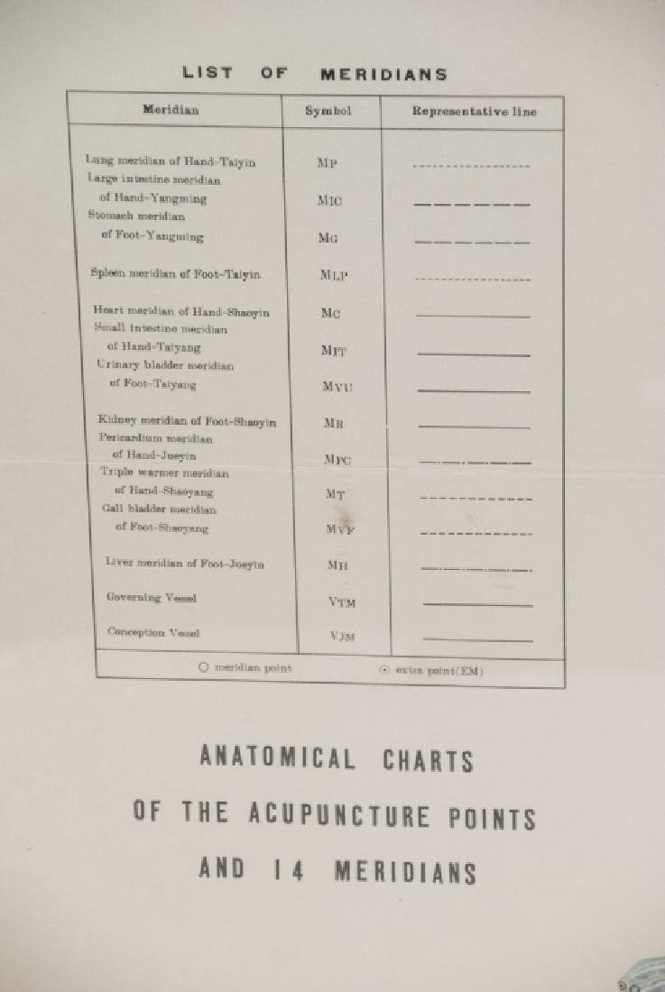 Vtg Chinese Acupuncture / Anatomical Chart Framed - 3