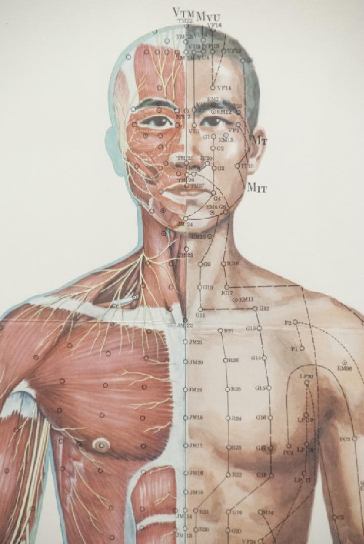 Vtg Chinese Acupuncture / Anatomical Chart Framed - 4
