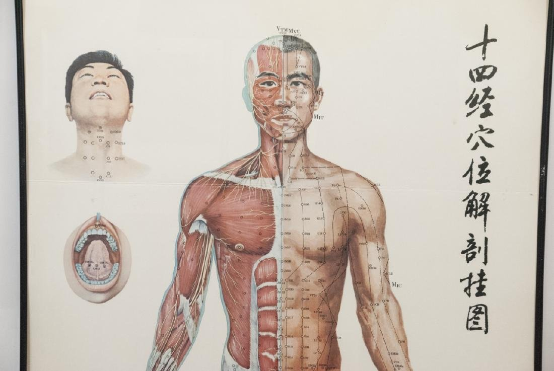 Vtg Chinese Acupuncture / Anatomical Chart Framed - 5