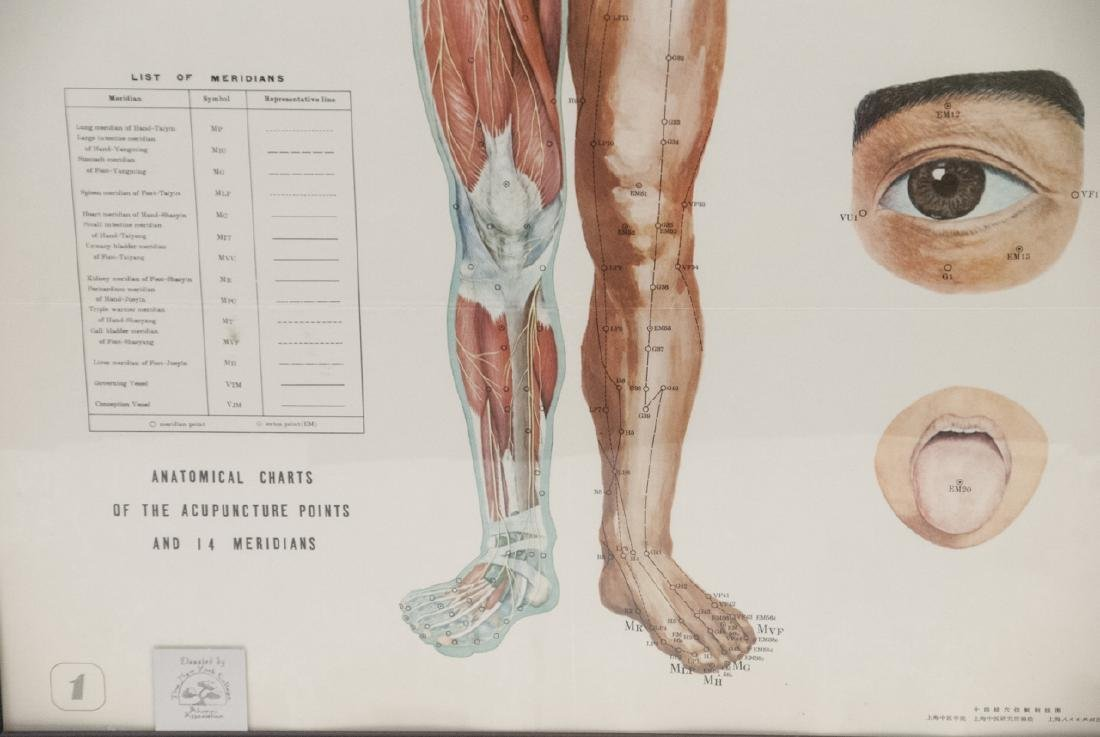 Vtg Chinese Acupuncture / Anatomical Chart Framed - 6