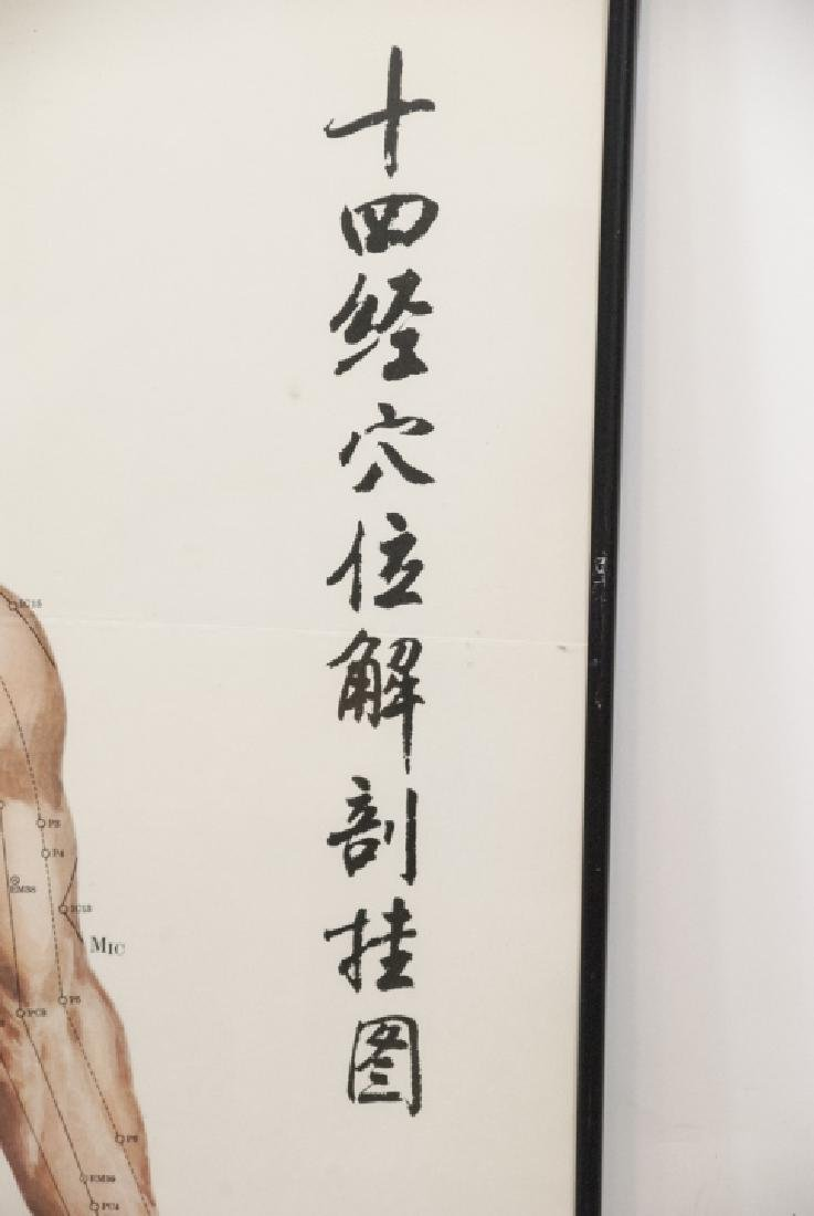 Vtg Chinese Acupuncture / Anatomical Chart Framed - 7