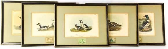 4 Hand Colored Engravings After John Audubon