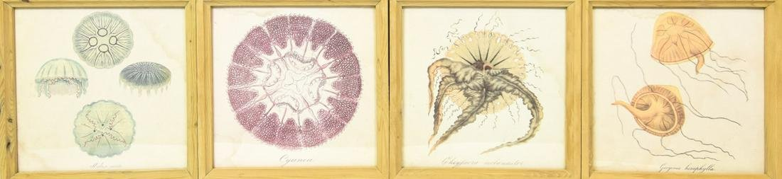 Framed Antique Hand Colored Lithographs Jelly Fish