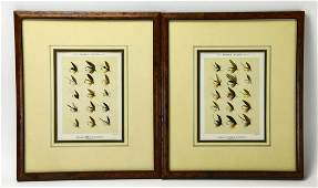 Pair Framed Lithographs of Orvis Fly Fishing Flys