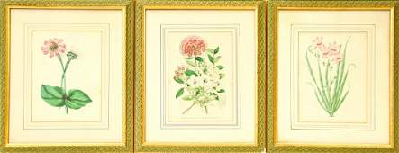 Set 3 G. Severeyns Flower Study Lithographs