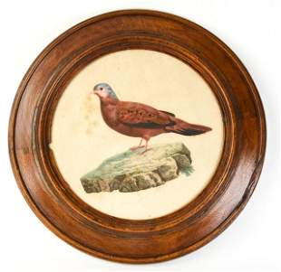 Antique Hand Colored Bird Lithograph Period Frame