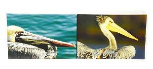 Two Kenyan Wildlife Pelican Print On Canvas
