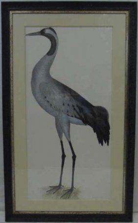 Custom Framed Ornithological Print Of A Crane