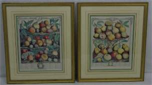 Pair 1732 Framed Hand Colored Botanical Prints