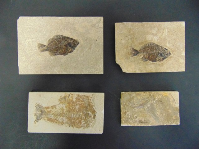 Collection of Ancient Fossils in Stone Panels