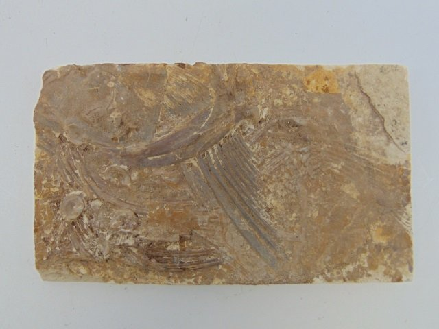 Collection of Ancient Fossils in Stone Panels - 2