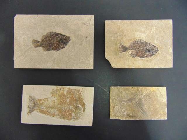 Collection of Ancient Fossils in Stone Panels - 5