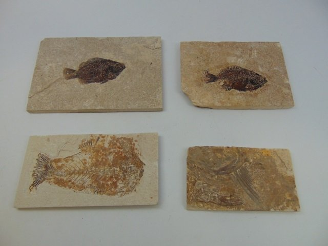 Collection of Ancient Fossils in Stone Panels - 6