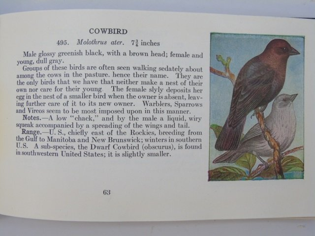 Antique Ornithological Book Land Birds Bird Guide - 3