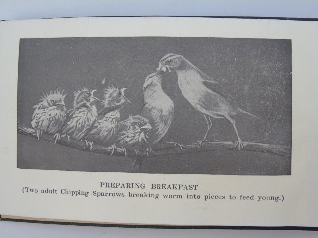 Antique Ornithological Book Land Birds Bird Guide - 5